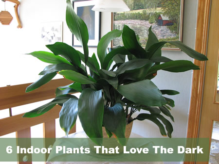 6 indoor plants that love the dark - Low light indoor house plants ...