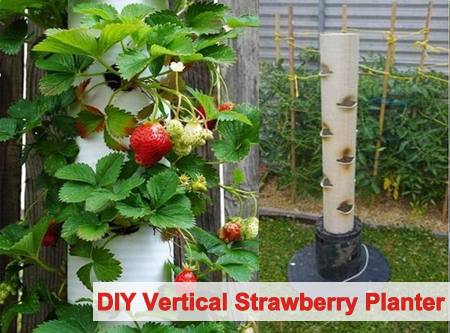 DIY Vertical Strawberry Tube Planter