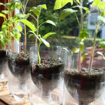 DIY Self-Watering Seed Starter Pots