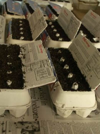 DIY Egg Carton Seedling Trays