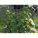 DIY How To Build A Cucumber Trellis