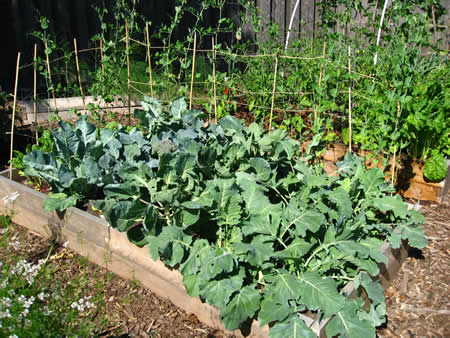 7 Advantages Of Raised Bed Gardening