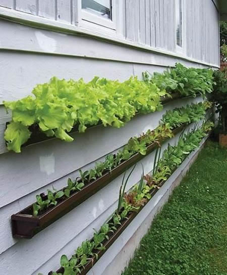 DIY Vertical Garden From Gutters