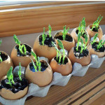 How To Plant Seeds In Eggshell Planters