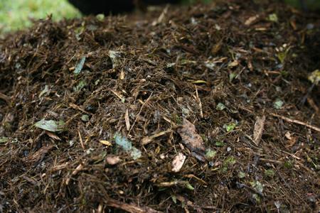5 Garden Composting Tips