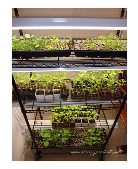 DIY Indoor Seed Starting Rack