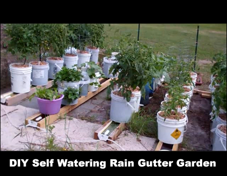 DIY Self Watering Rain Gutter Garden