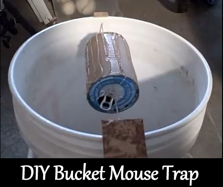 DIY 5 Gallon Bucket Mouse Trap