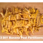 3 DIY Banana Peel Organic Fertilizers