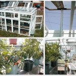 DIY Greenhouse Made From Old Windows