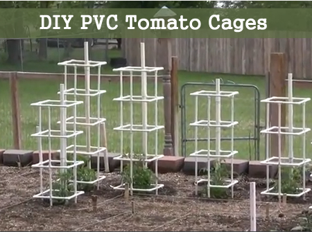 DIY PVC Tomato Cages