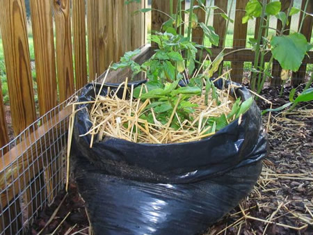 How To Grow Potatoes In A Trash Bag