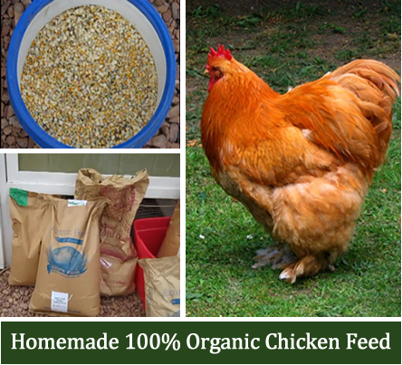 Homemade Organic Chicken Feed Recipe