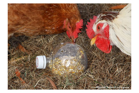 DIY Chicken Boredom Buster Toy