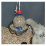 DIY Plastic Bottle Chick Feeder