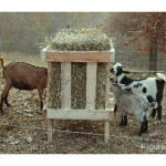DIY Square Bale Goat Hay Feeder