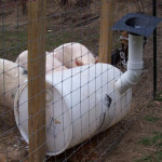 DIY Homemade Pig Feeder