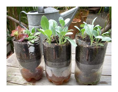 DIY 2L Soda Bottle Sub-Irrigated Planters
