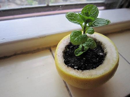 Citrus Peel Seedling Starter Pot