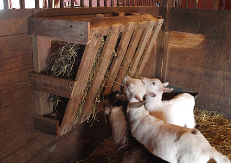 DIY Wood Pallet Goat Hay Feeder