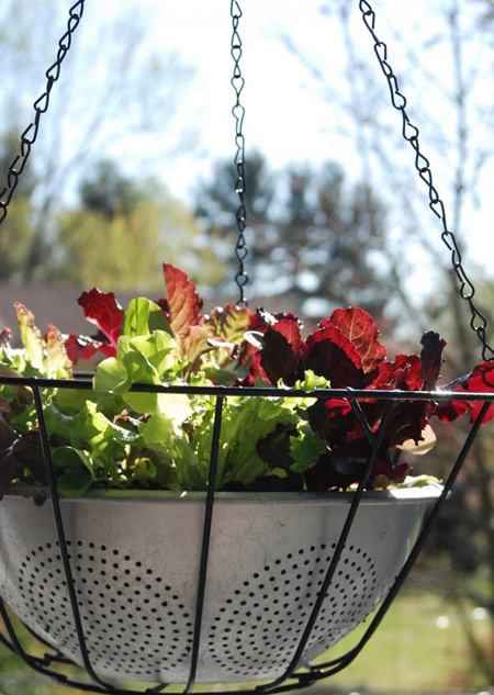 DIY Hanging Lettuce Leaf Basket