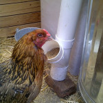 DIY No Spill PVC Chicken Feeder