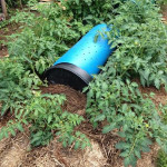 DIY Plastic Barrel Drought Pod
