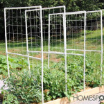 How To Build A DIY PVC Tomato Trellis