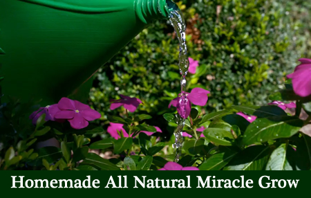 Homemade All Natural Miracle Grow