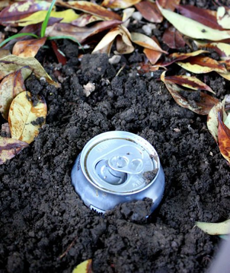 How to get rid of slugs with beer - How to get rid of slugs in garden ...
