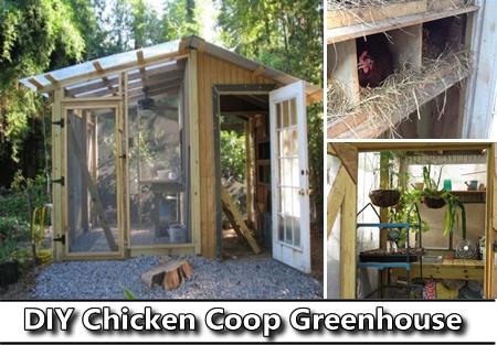 DIY Chicken Coop Greenhouse Plans
