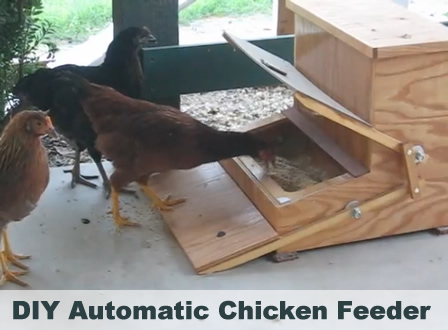 Chicken Treadle Feeder Plans