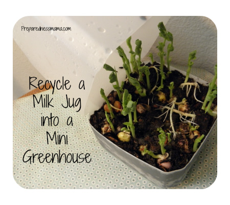 DIY Milk Jug Mini Greenhouse
