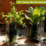 DIY 2L Soda Bottle Garden