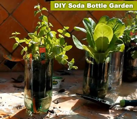 DIY 2L Soda Bottle Garden
