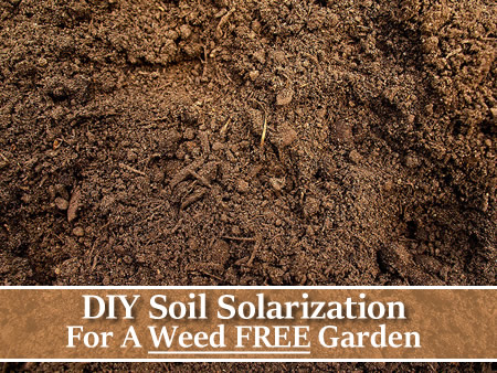 DIY Vegetable GardenSoil Solarization