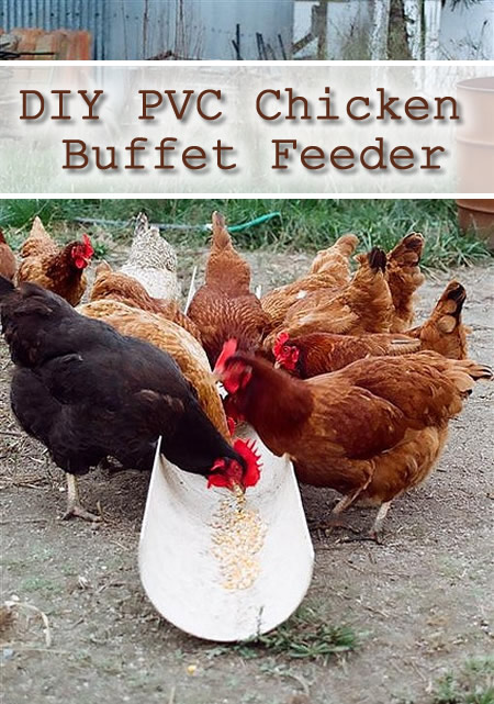 DIY PVC Chicken Buffet Feeder