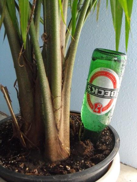 DIY Old Beer Bottle Plant Waterer