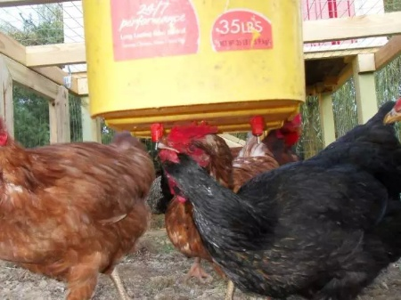 DiY Chicken Nipple Waterer