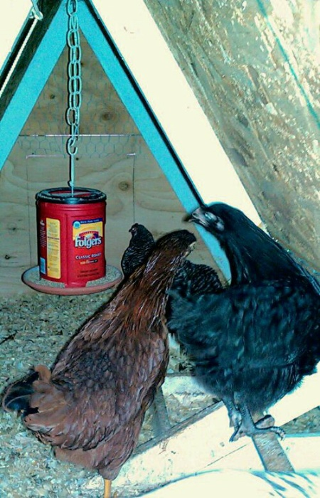 DIY Hanging Plastic Coffee Can Chicken Feeder