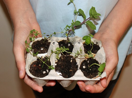 DIY Egg Carton Herb Garden
