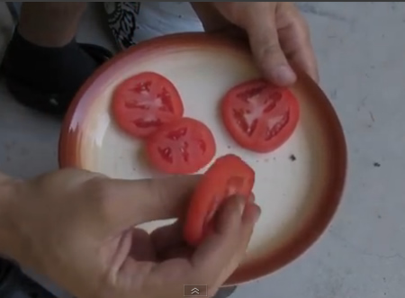 Growing Tomatoes The Easiest Way