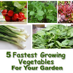 5 Fastest Growing Vegetables For Your Garden
