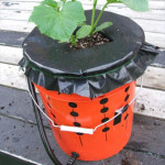 How To Make An Alaska Grow Bucket