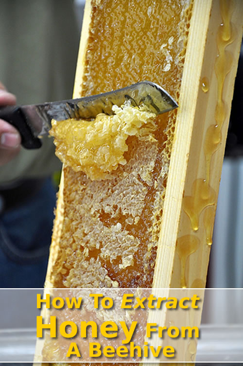 How To Extract Honey From A Beehive