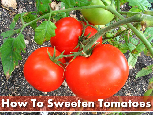 How To Sweeten Your Tomatoes