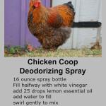 Homemade Chicken Coop Deodorizer Spray Recipe