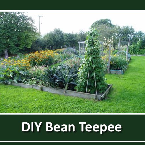 DIY Bamboo Bean Teepee
