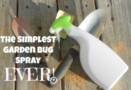 Homemade Garden Bug Spray Recipe