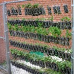 DIY Plastic Bottle Vertical Garden